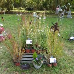 Pépinières et plantes d'exception à Borest : j-2...