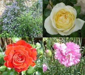 Mozaique-fleurs-1.jpg