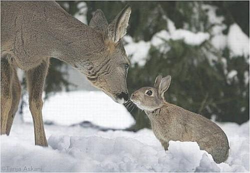 Bambi--Panpan.jpg
