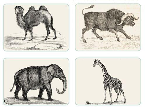 les animaux du monde - anglais ce1 ce2