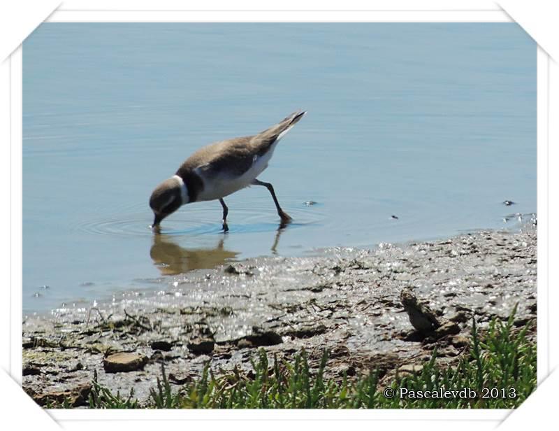 Pause ornithologique estivale au Teich - 7/12