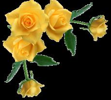 Pourquoi offrir des fleurs?