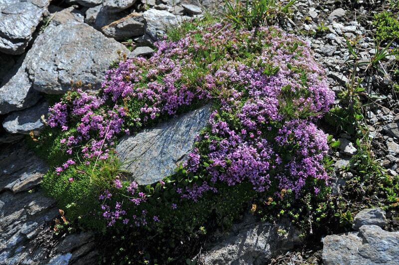 Randonnée en Italie : le mont Zerbion (4)