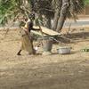 Burkina Bomborokuy