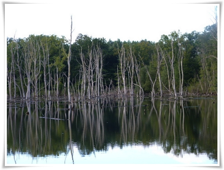 lac aux arbres morts