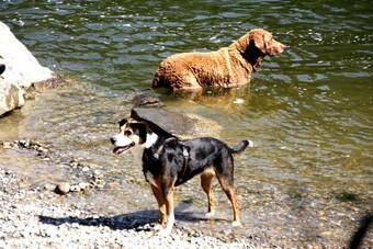 Nénette et les chiens