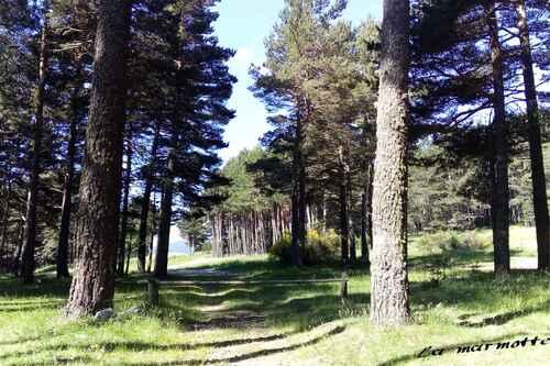 Une balade en forêt ...