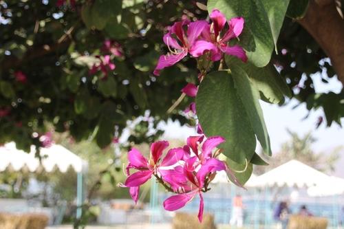 Fleurs d'Inde