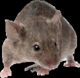 Tubes Souris Rats