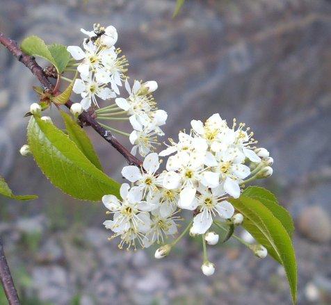 Fleurs printanières 5