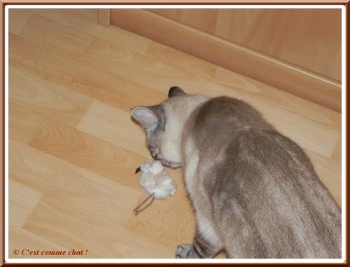 Caline joue avec un oiseau en peluche