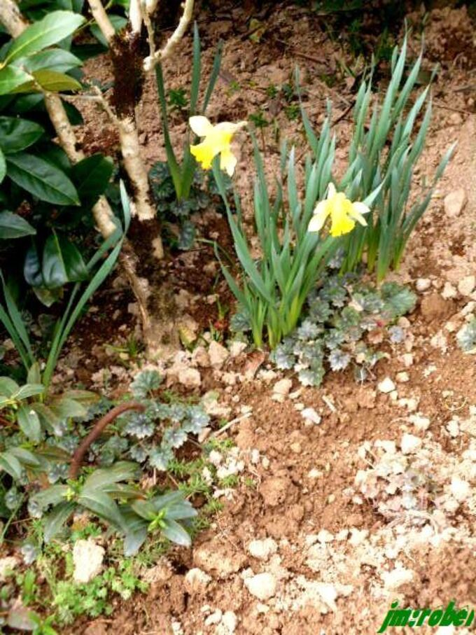 2021, La douceur de Février , si on jardinait