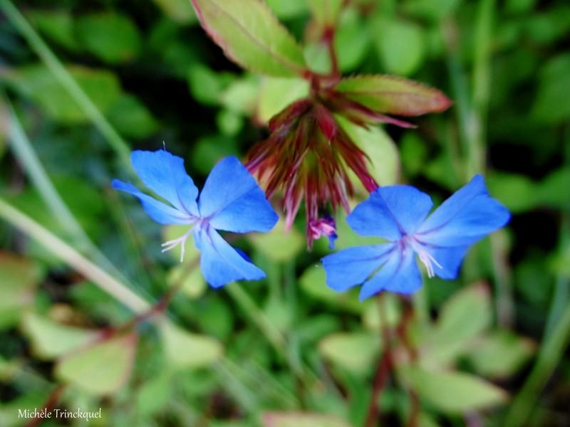 """Une petite balade """"fleurs et feuilles"""" dans mon village, le 26 septembre..."""