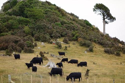 Direction Christchurch où nous devons rendre notre Van