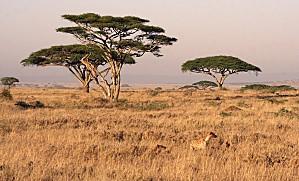 serengeti-landscape