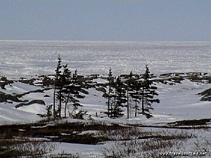 107830-arctic-trees-epinette-churchill-canada-717004