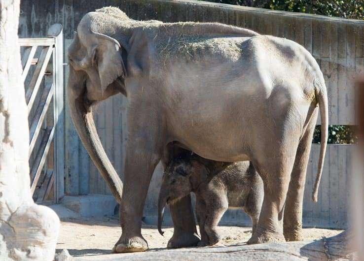 Espagne: un éléphant tue un gardien de zoo dans le parc naturel de Cabárceno