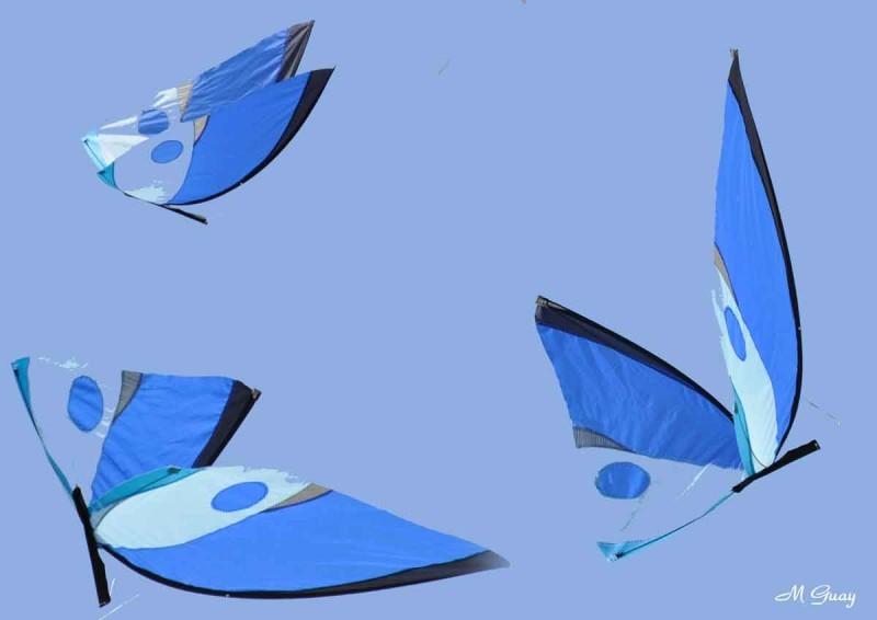 papillon-cerf-volant.jpg