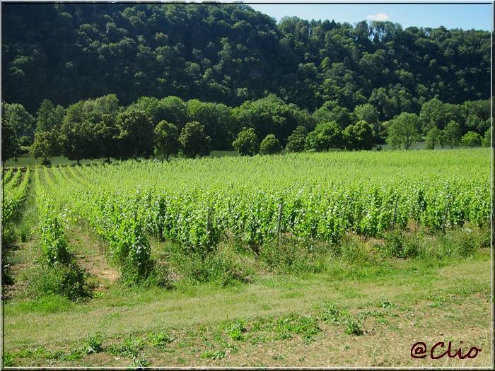 Des vignes en Wallonie