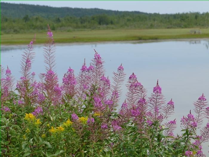 Fleurs sauvages, photos prises le 8 août..