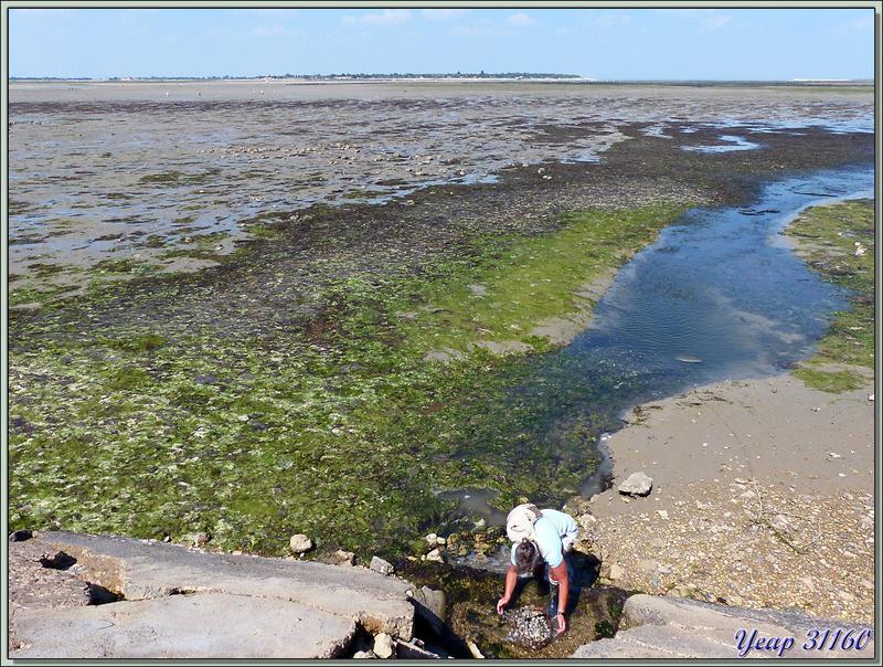 Bonne pêche aux palourdes à marée basse - Ars-en-Ré - Île de Ré - 17