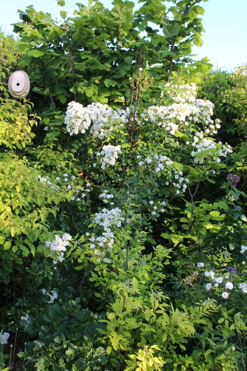 Scènes de jardin