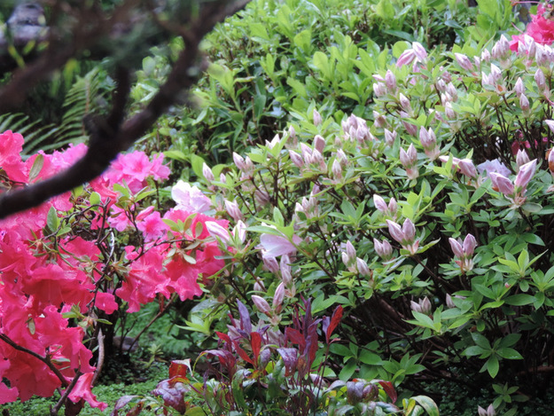 Petit jardin japonais en 2015