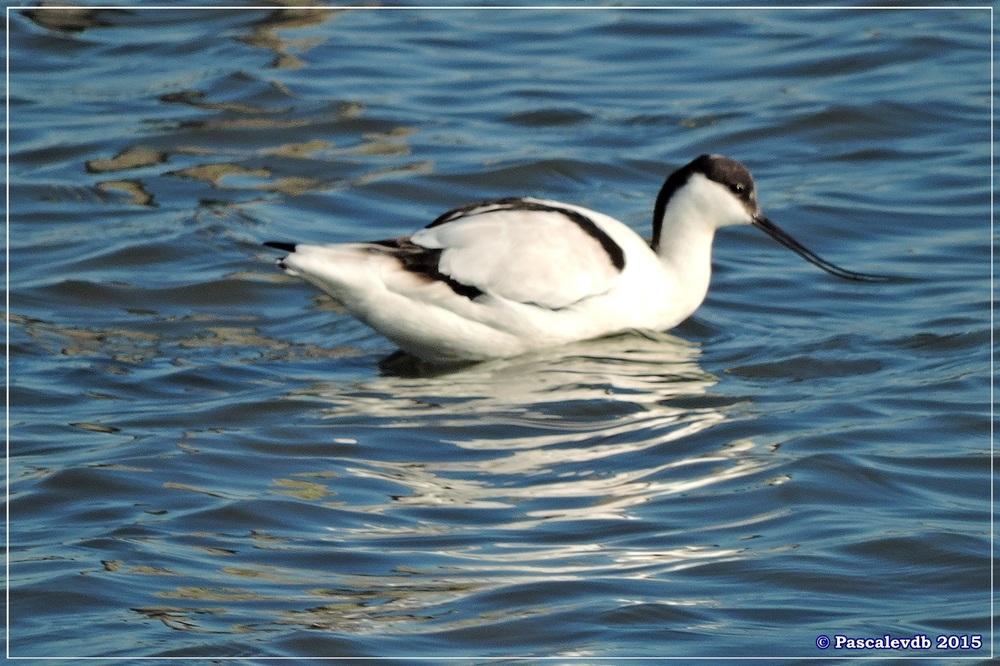 Réserve ornitho du Teich - fin décembre 2015 - 2/6