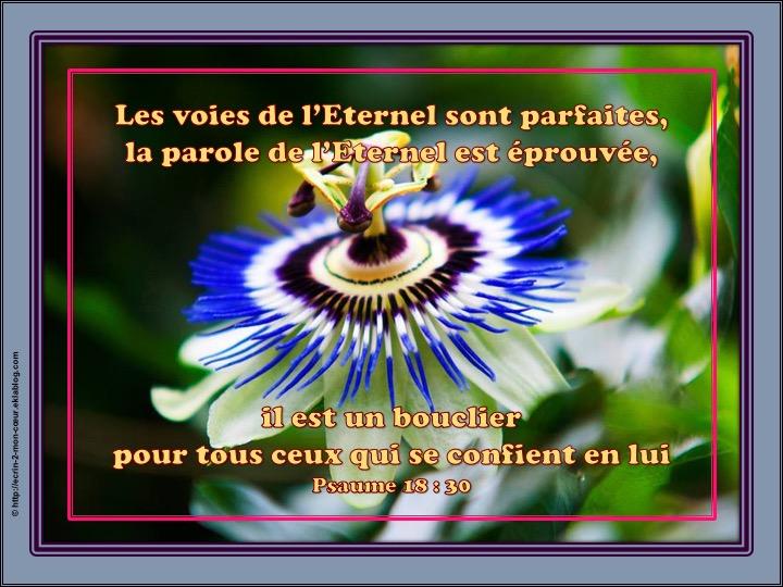 L'Eternel, notre bouclier - Psaumes 18 : 30