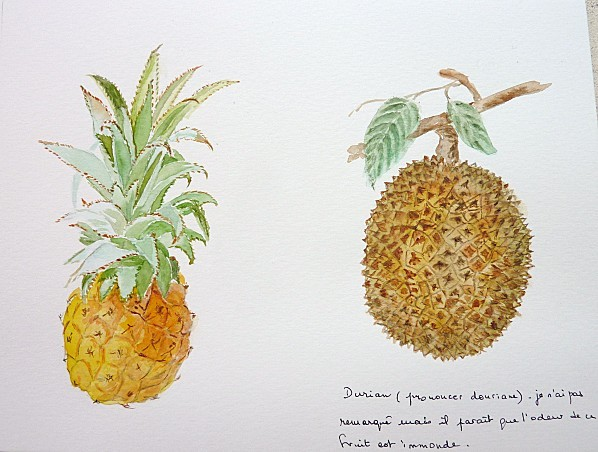 ananas et durian