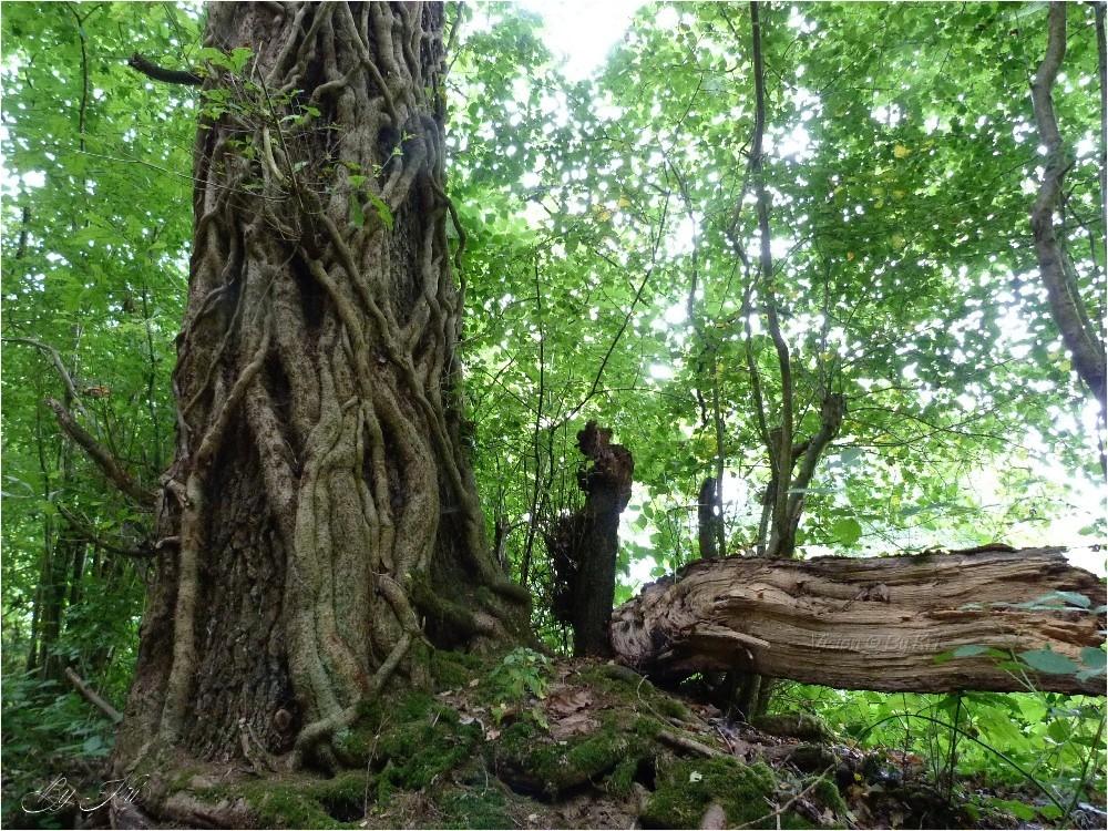 Rencontres en forêt ...