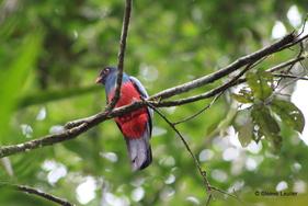 Costa Rica, les oiseaux