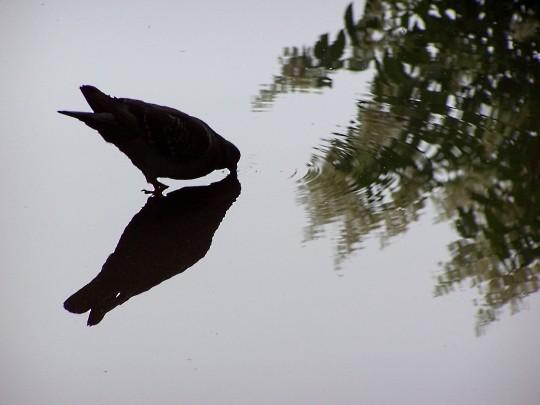 Les oiseaux de l'Arc Héré à Nancy 7 mp1357 2011