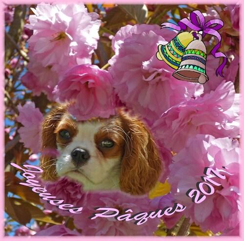 Bon Weekend de Pâques....