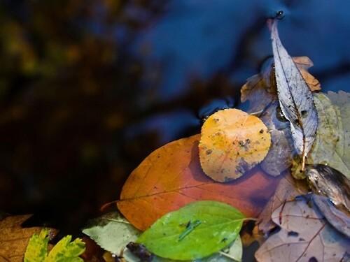 10 petites images et gifs d'automne