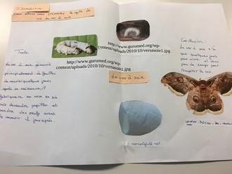 Les affiches en 6A : les différentes utilisations de la matière organique par l'Homme