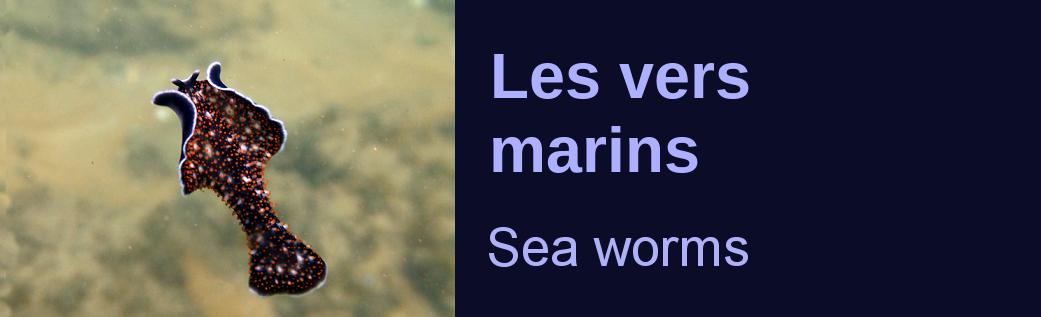 vers marins