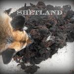 shetland brute, de mauvaise qualité