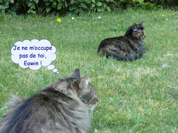 Bataille de chats pour rire parce qu'on s'aime !