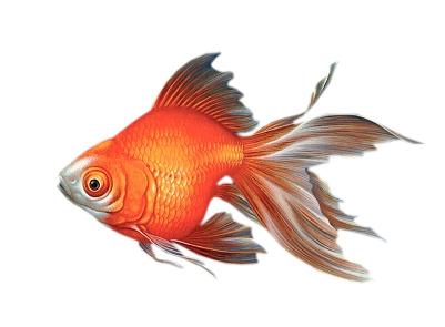 images poissons Ecrire un nouvel article