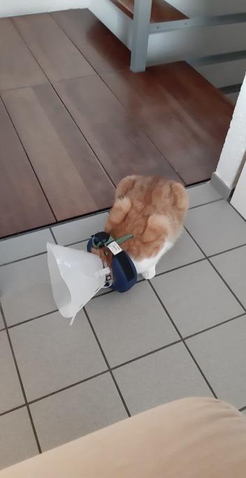 Les bagarres entre chats!