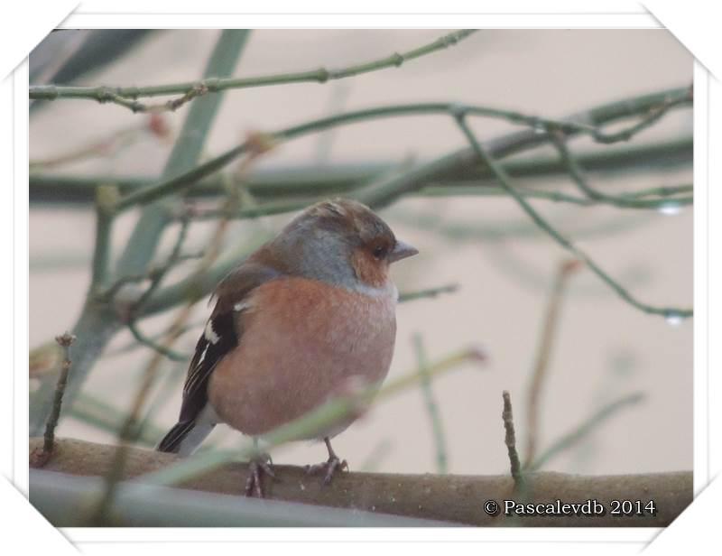 """Les oiseaux de """"mon"""" chemin - 6/9"""