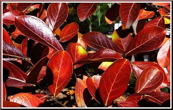 feuillage-d-automne-c.jpg