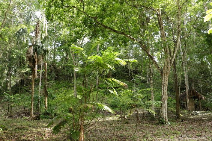 Site maya d'El Zotz