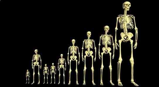 Découverte de squelettes géants