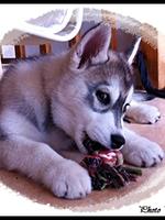 Jaïka (2,5 mois)