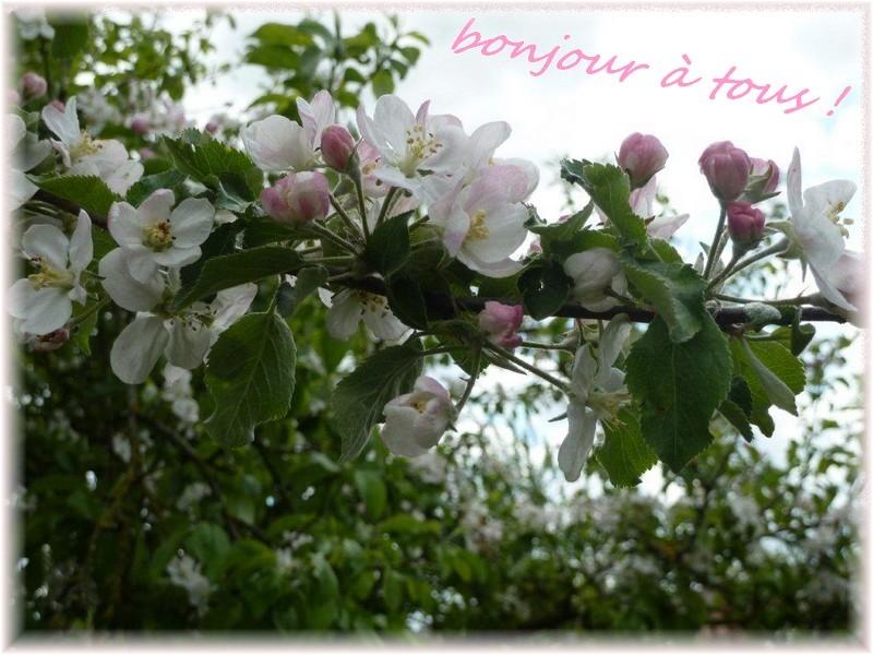 """On l'attend ... """"le printemps"""" !"""