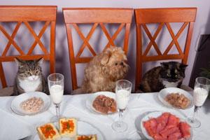Une épicerie de luxe pour les animaux