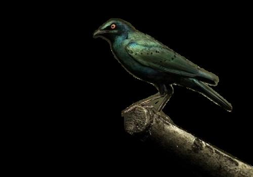 Tubés madaras képek