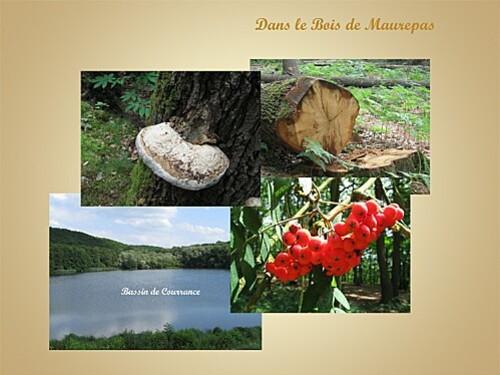 Bois Maurepas-1